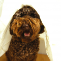 Here are 4 options to help your dog with dog noise anxiety!