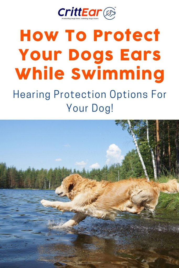Do you have a dog that loves water? Can dogs swim and dive with earplugs - and should they?