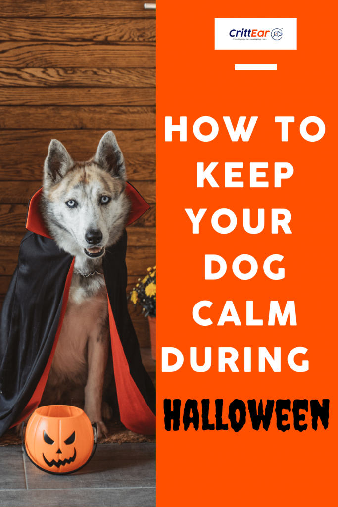 If Your Dog Has Noise Anxiety We Can Help Them Get Through Halloween!  #noiseanxiety #earplugsfordogs #dogearplugs