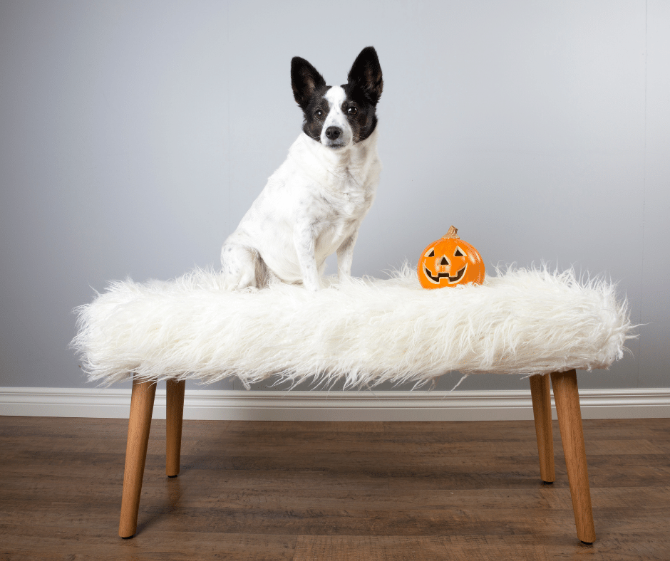 My Dog Has Noise Anxiety - So How Can We Enjoy Halloween? #dogearplugs #noiseanxiety #earplugsfordogs