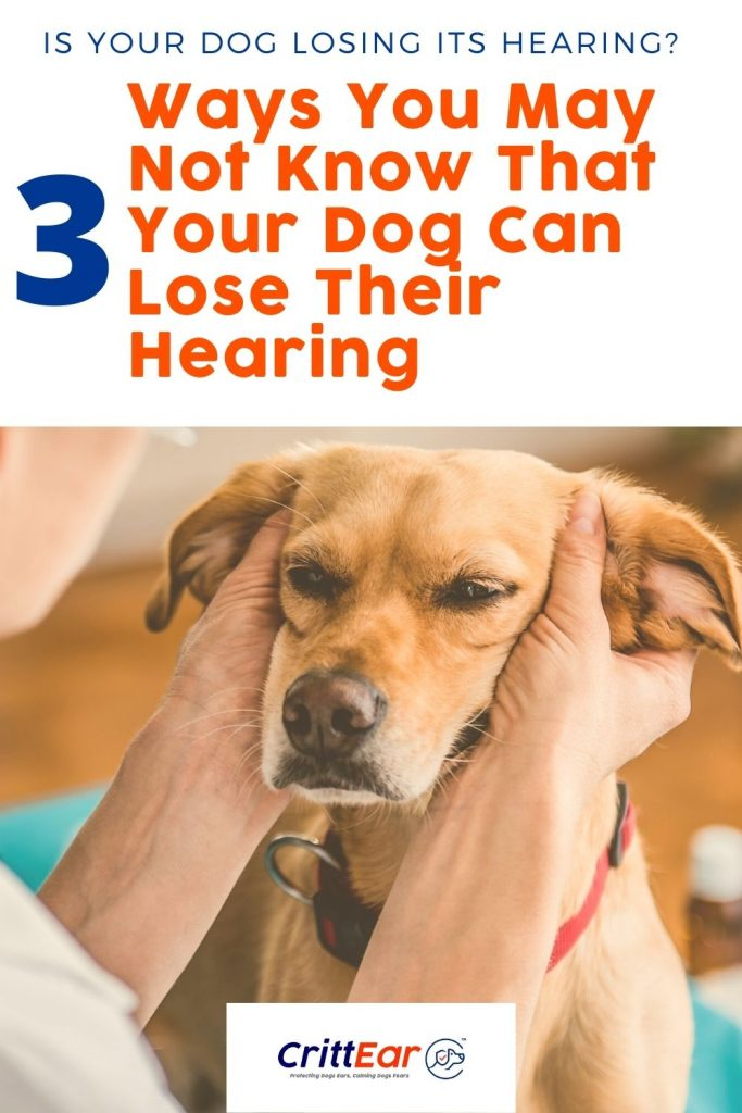Three Surprising Ways Dogs Can Lose Their Hearing - and steps you can take today to prevent hearing loss in your dog! #hearingloss #doghearing #crittear