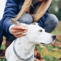 Three surprising ways dogs can lose their hearing - and what you can do to prevent hearing loss! #hearingloss #doghealth #crittear