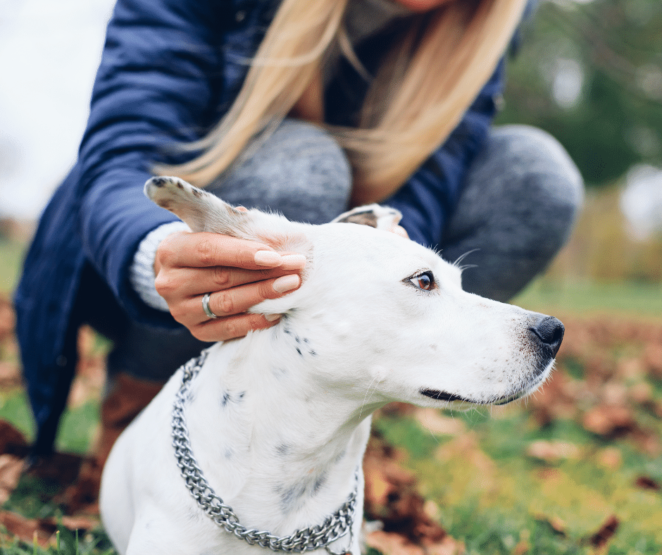 three surprising ways dogs can lose their hearing – Cover