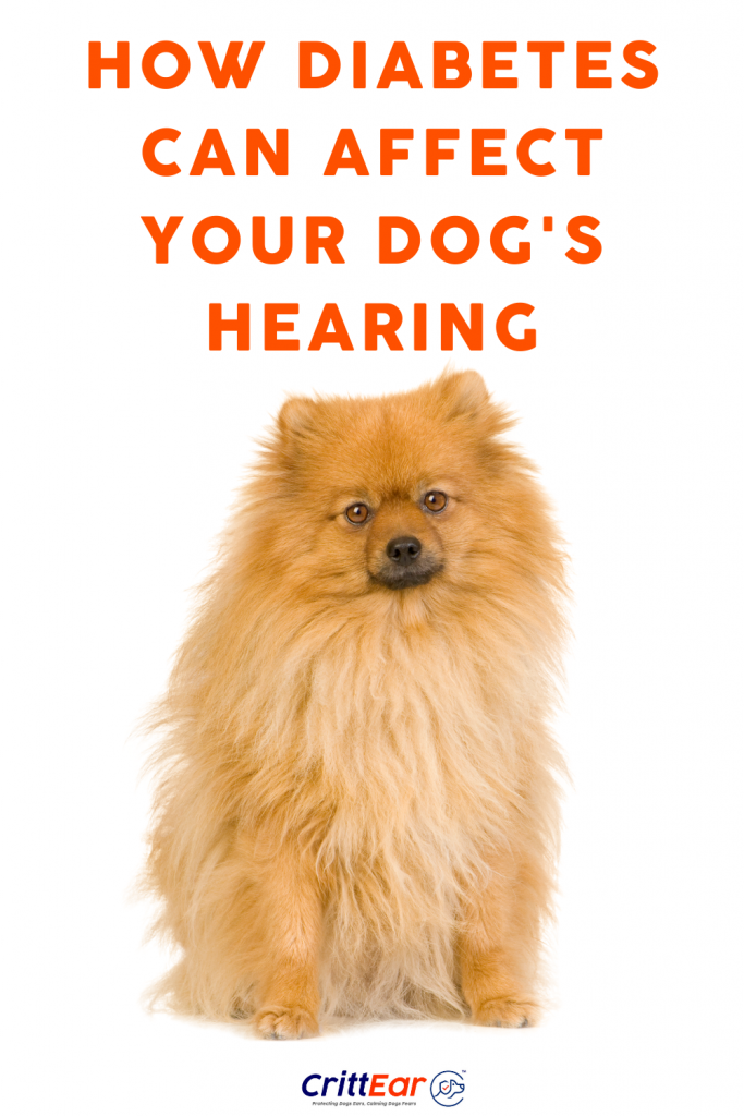 How Diabetes Can Affect Your Dog's Hearing and What You Can Do To Protect Them! #crittear #dogearplugs #caninediabetes