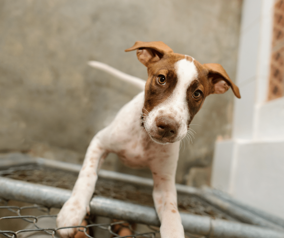 Shelter Dogs Benefit From Noise Dampening Approach – cover