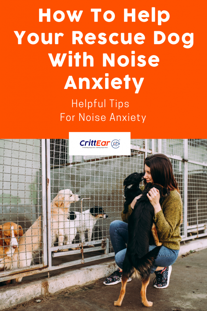 Shelter dogs benefit from noise dampening approach - and we give you tips for helping your newly adopted shelter dog! #shelterdog #noiseanxiety
