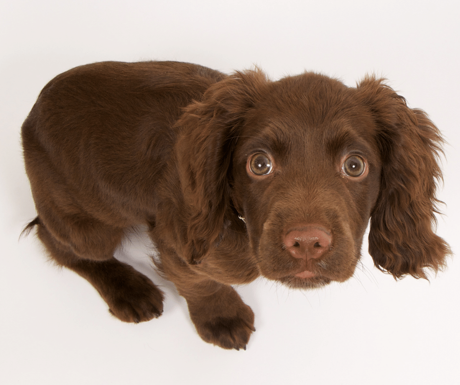 anxiety in dogs has clinical implications cover