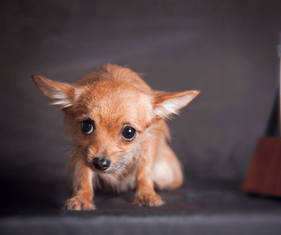 is curing your dogs anxiety as simple as giving them medication cover