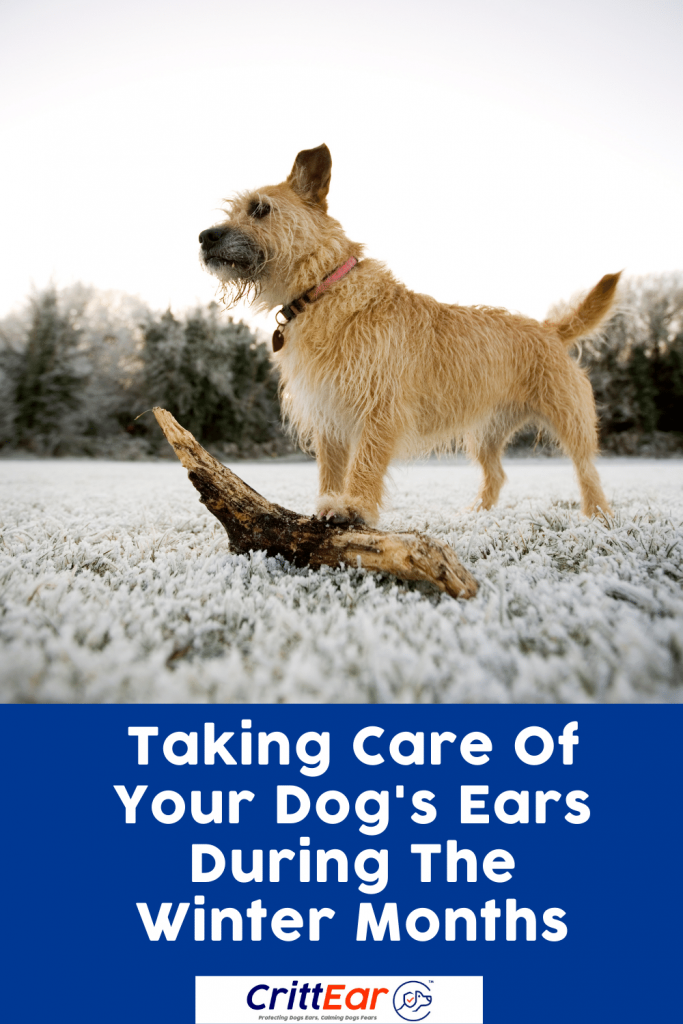 Wonder how to take care of your dogs ears during the winter months? We help you out! #crittear #dogearplugs #earplugsfordogs