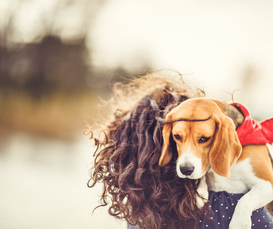 three fastest cures for dogs with anxiety