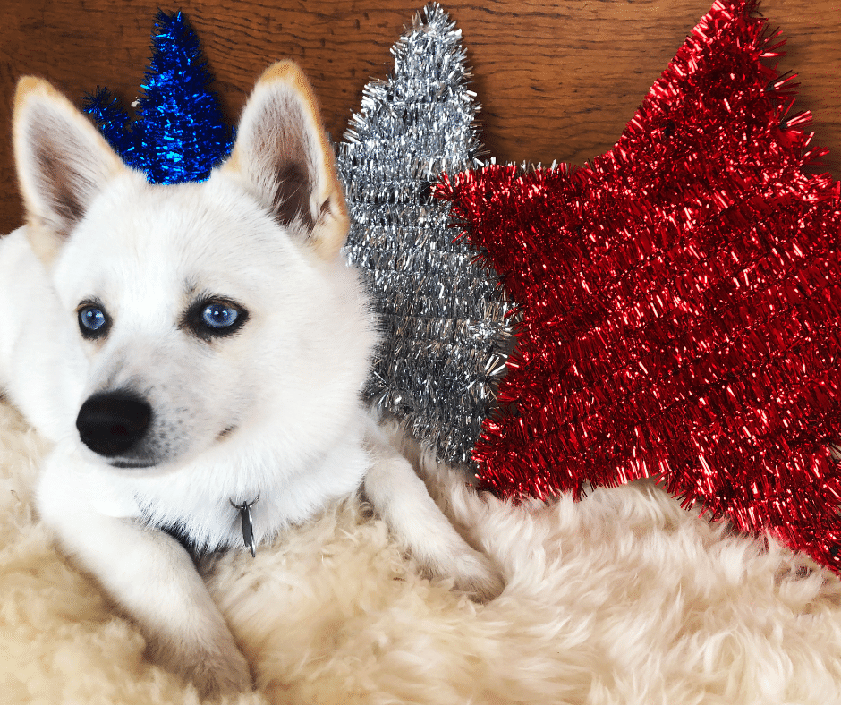 why the fourth of july causes noise anxiety in dogs