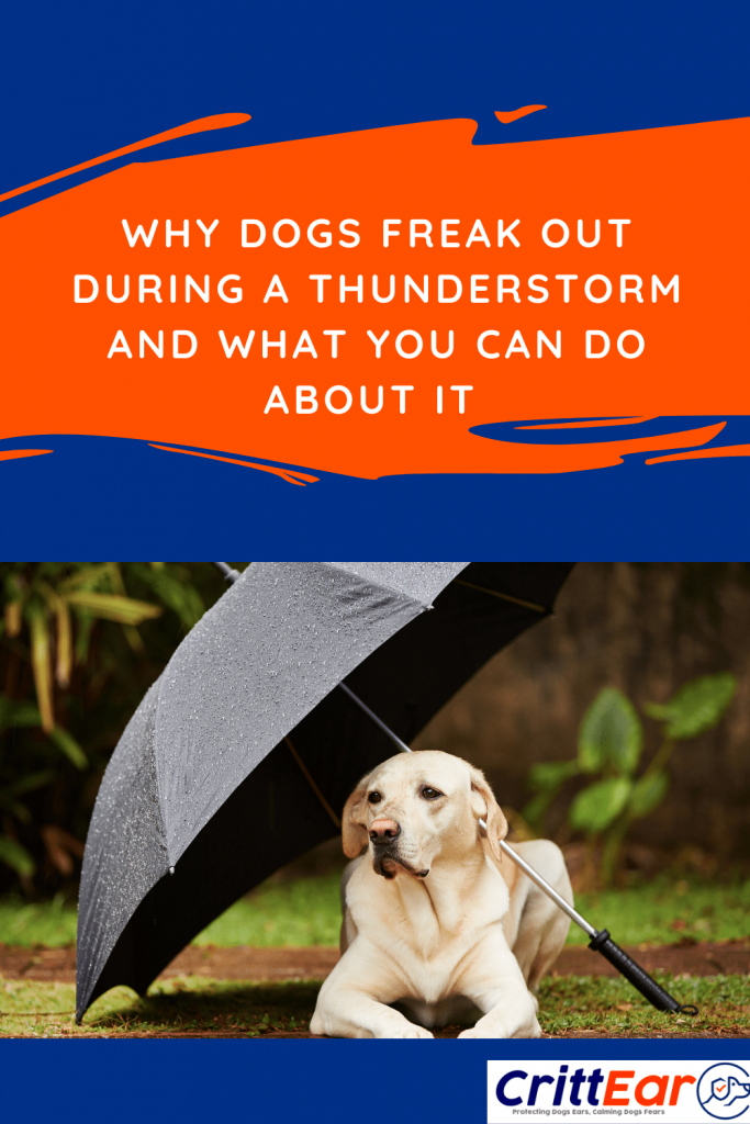 Dogs freak out during a thunderstorm - learn the reasons behind it and how you can help your dog! #thunderstorms #noiseanxiety #dogearplugs
