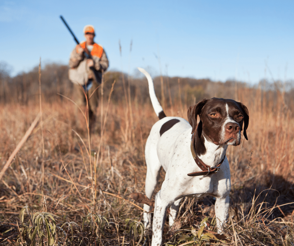 Copy of hunting dog safety equipment – CrittEar