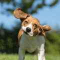 What Should I Do If My Dog Shakes Out Their Dog Earplugs?
