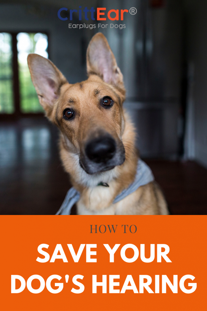 Save your dogs hearing - we give you a quick test you can perform every month (and your dog will find it fun too!)!