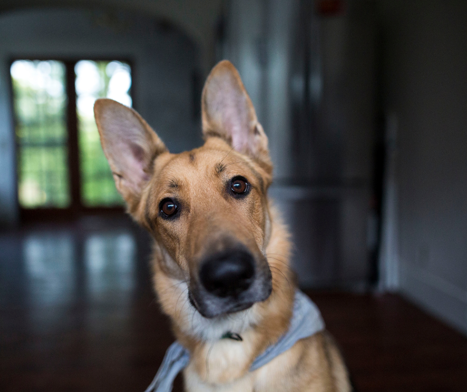 heres how to save your dogs hearing – crittear