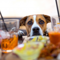 Here's how to happy hour at home and how to keep your dog calm while! By CrittEar
