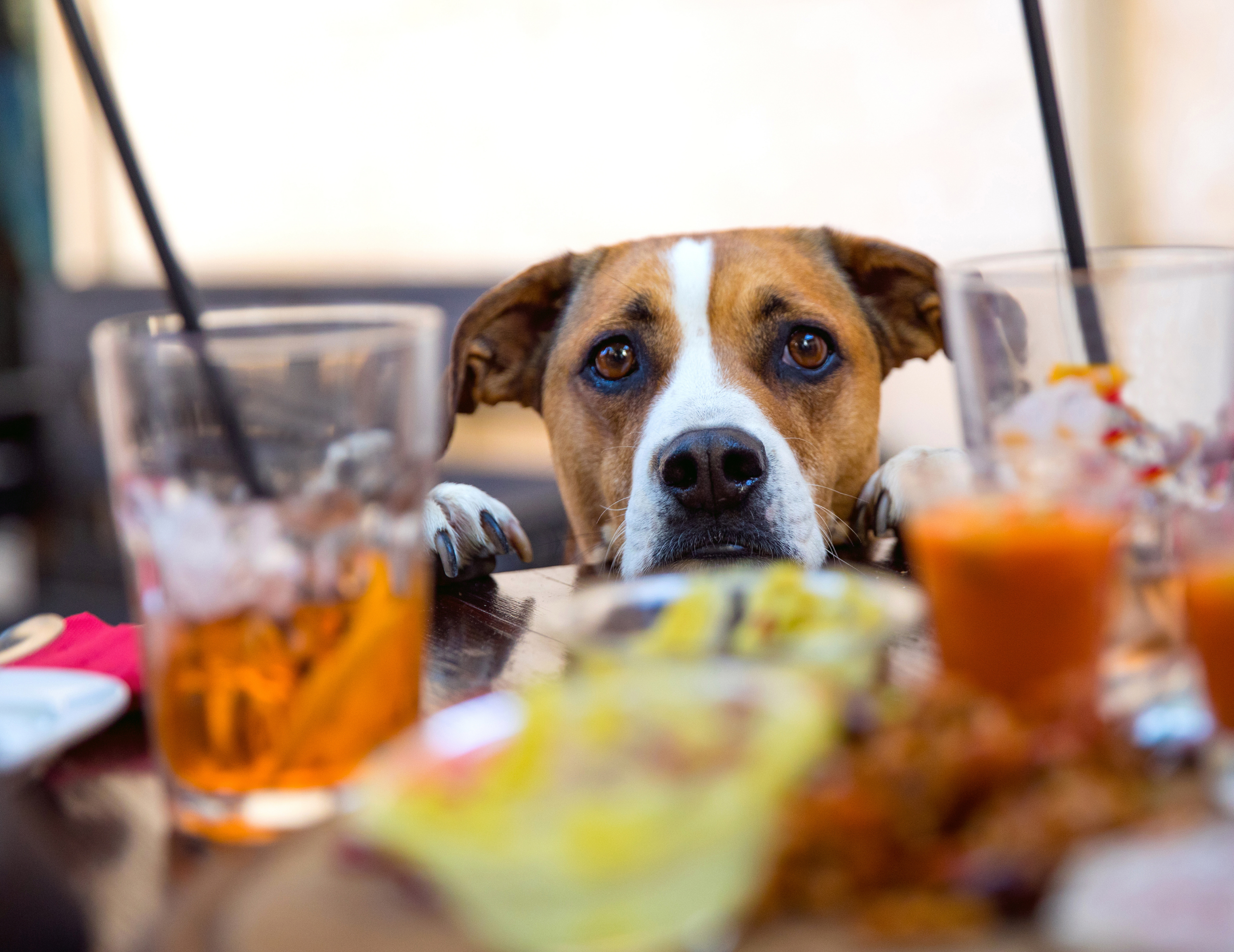 happy hour how to keep your dog calm