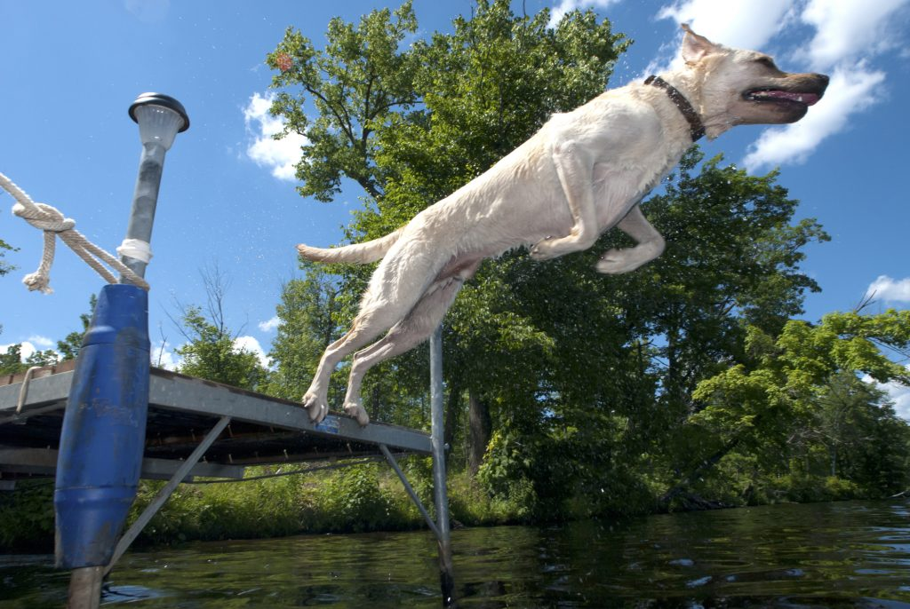 We partner with dock diving dogs on their competitive tour of 2021