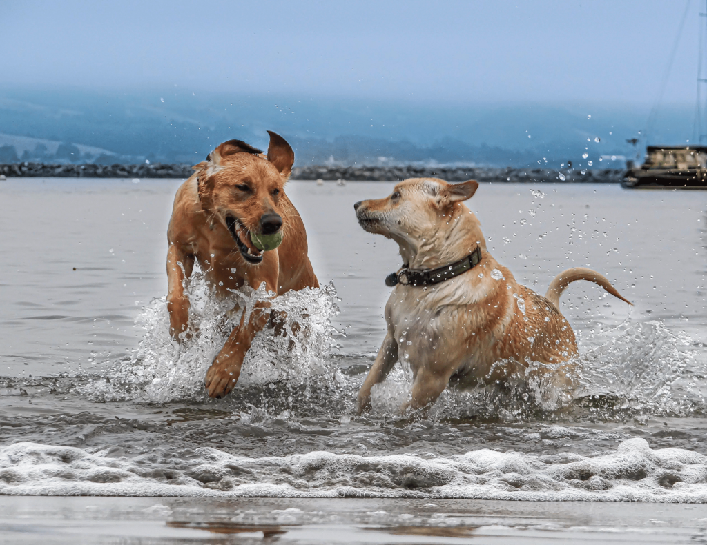 Want to learn how to keep your water dog ears infection free? We've got the info you need here!