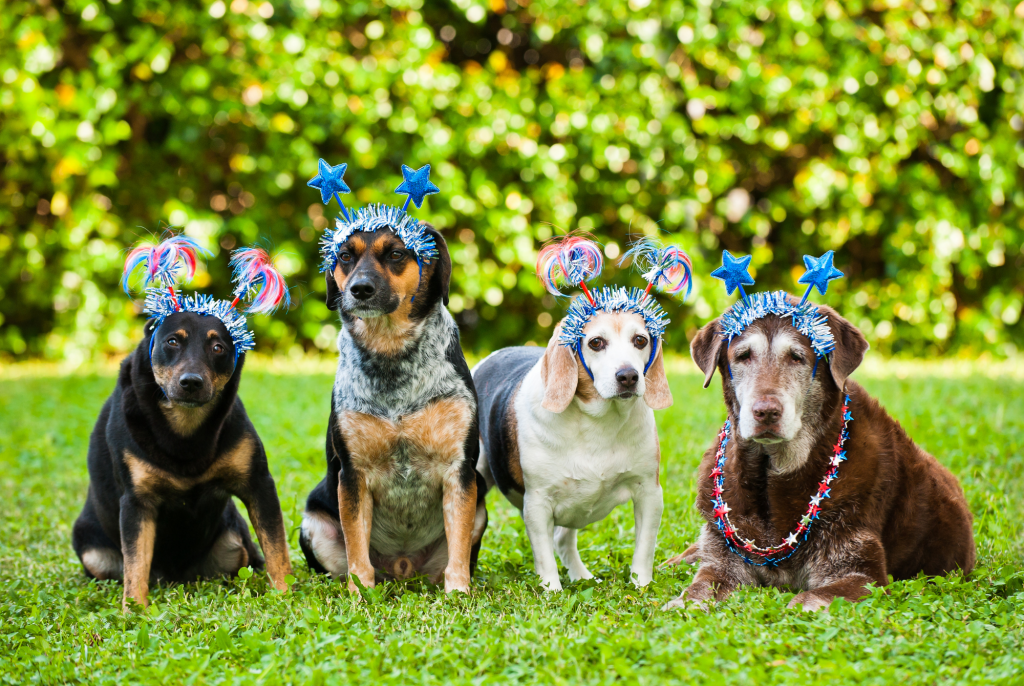 Firework Anxiety In Dogs - Lessons Learned
