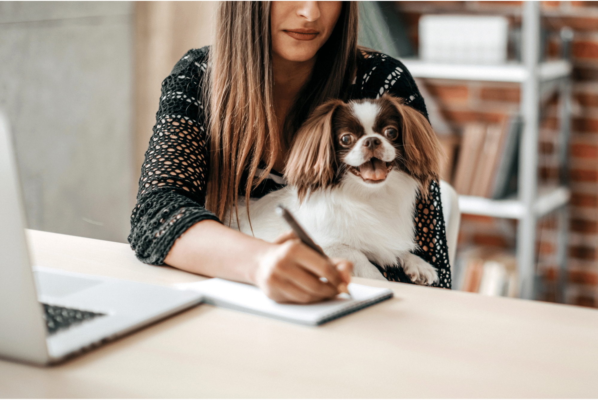 how to deal with return to work anxiety in dogs – cover