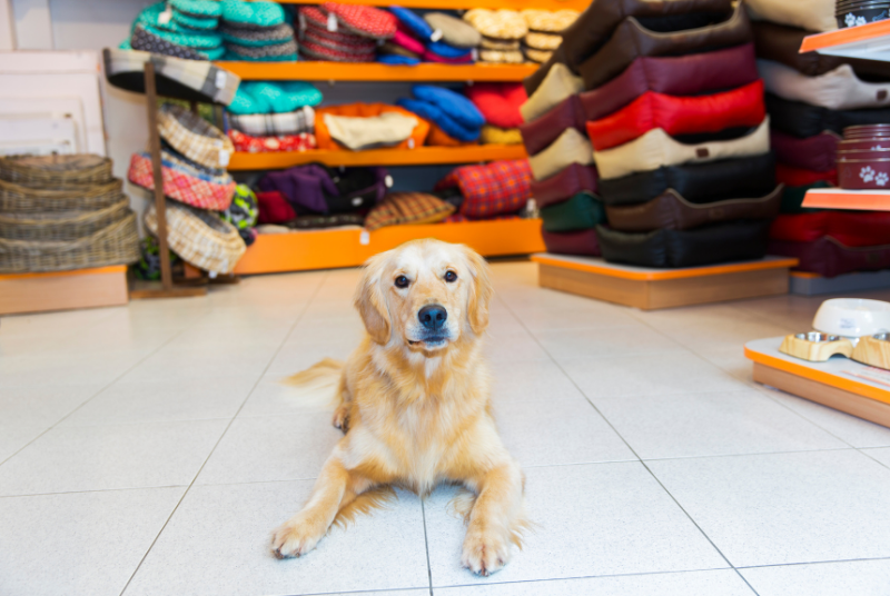 why you should sell dog earplugs in your pet store
